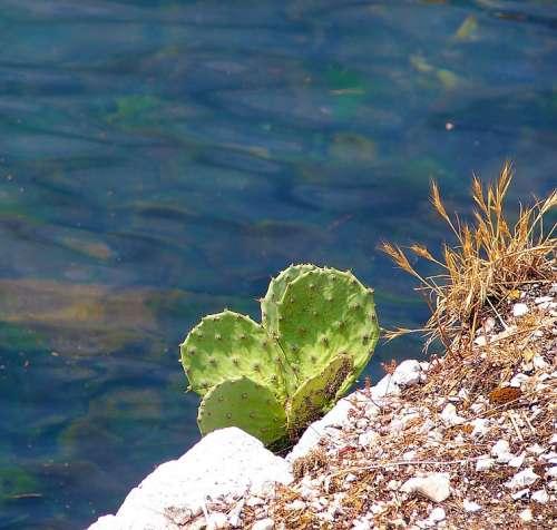 Cactus Rock Sea Water