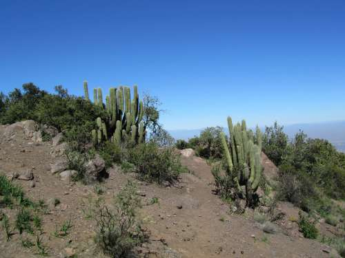 Cactus Chile Andes Dry Hot Blue Sky Sandy