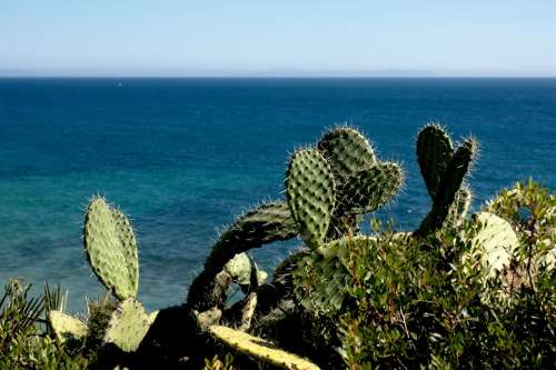 Cactus Nature Summer Costa Sea Spain Landscape