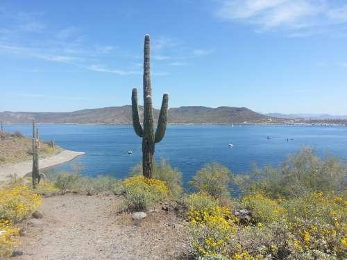 Cactus Mountains Arizona Landscape Mountain