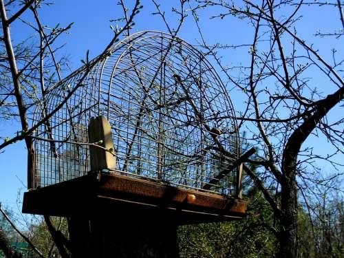 Cage Tree Cherry An Empty Garden