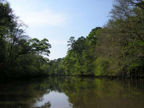 Calcasieu River River Water Trees Nature Calm