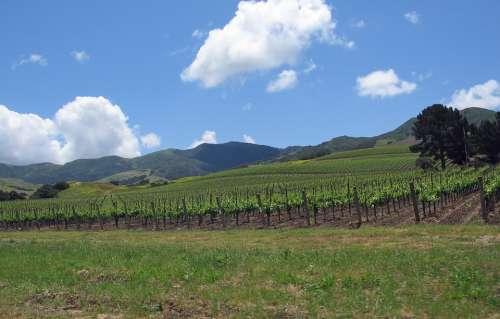 California Santa Ynez Valley Landscape Vineyard
