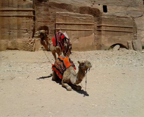 Camel Pair Colorful Blanket Saddle Rock Desert