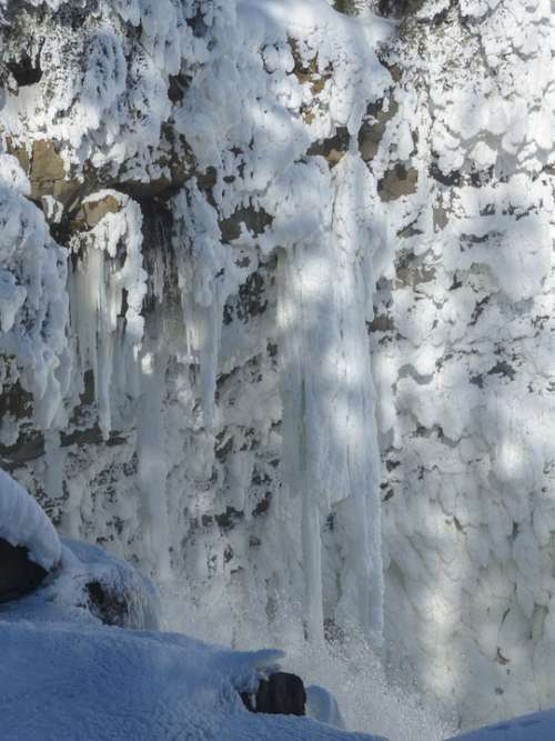 Canim Falls British Columbia Canada Frosted Tree