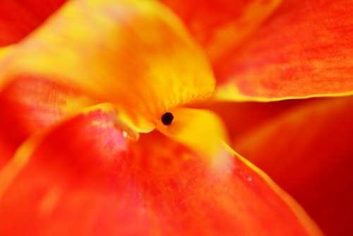 Canna Flower Petals Center Of Flower Red Flower