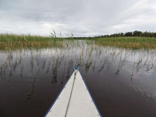 Canoeing Bug Lake Reed Landscape Water