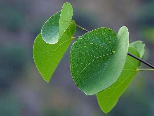 Canyon Leaves Leaf Landscapes Nature