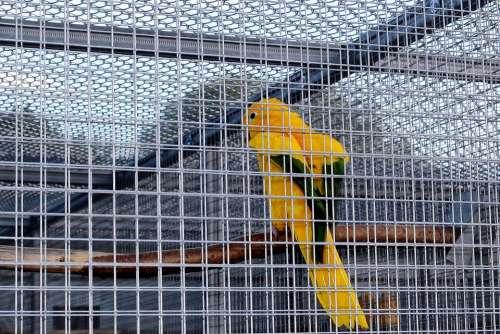 Captivity Cage Bird Cage Bird Parakeet