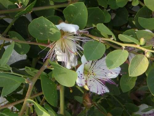 Capture Plant Capture Bush Blossom Bloom