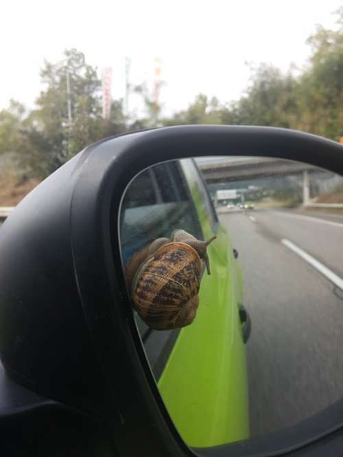 Car Snail Swiss Drive Race Road Highway Funny