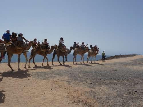 Caravan Camel Desert Ship Ride Transport