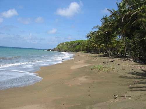 Caribbean Beach Palm Trees Sand Sand Beach Lonely