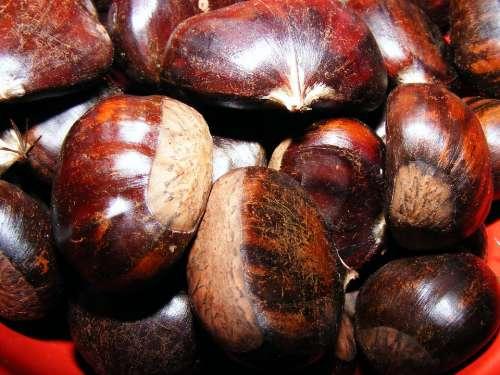 Castanea Chestnut Fagaceae Fruit Sativa Sweet