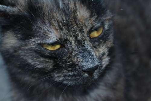 Cat Kitten Animal Animals My Favorite Gray Feline