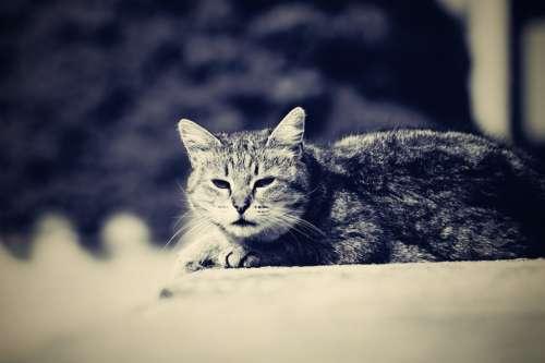 Cat Resting Cat Animal