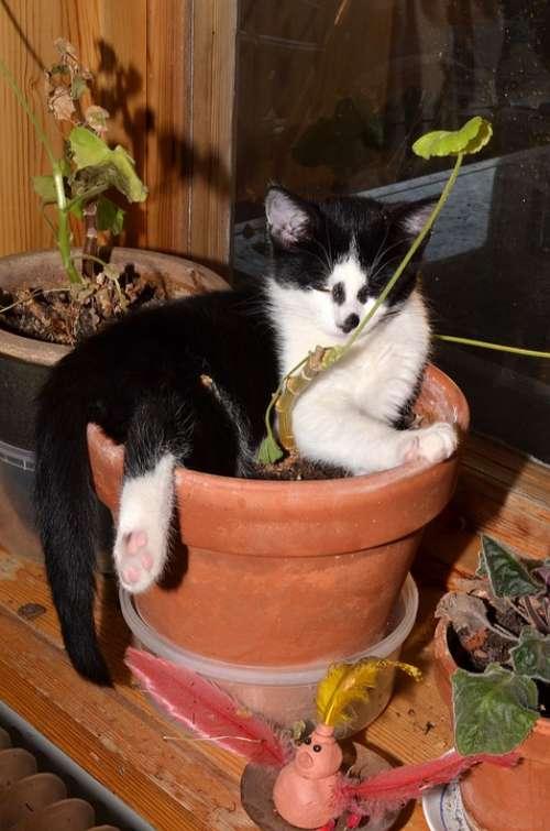 Cat Flower Pot Animals