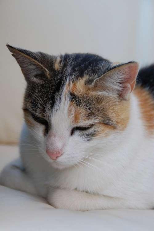 Cat Cat Face Animals