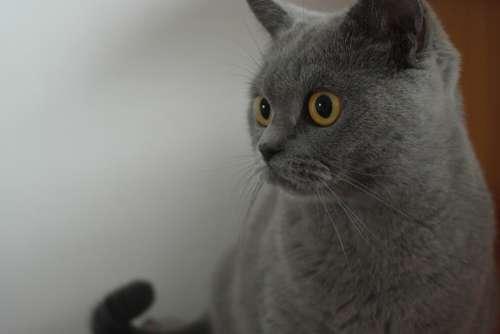 Cat Home Eyes Gaze
