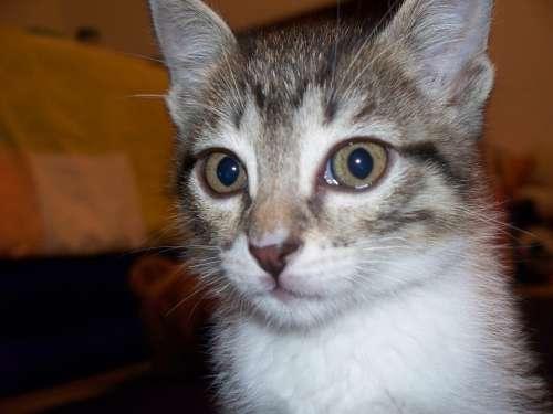 Cat Cute Cat Cat Face Animal Cat'S Eyes Animals