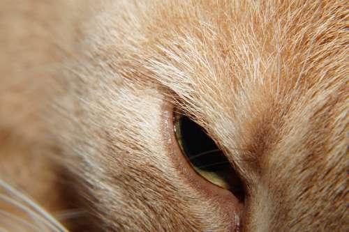 Cat Head Eye Beauty Noble Portrait Face Macro