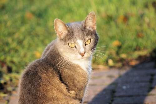 Cat Domestic Cat Mieze Curious Close Up Portrait