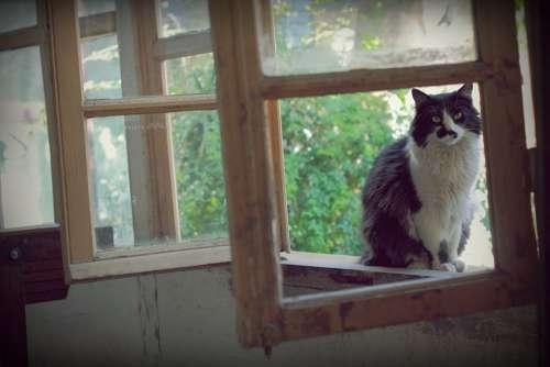 Cat Pet Animal Rest Feline Animals