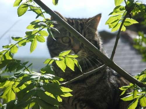 Cat Tomcat Tabb Pet Domestic Leaves Trees