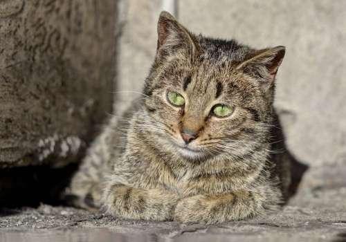 Cat Animals Kitten Tomcat Fur A Young Kitten