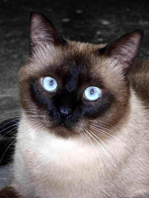Cat Feline Animal Gata Kitten