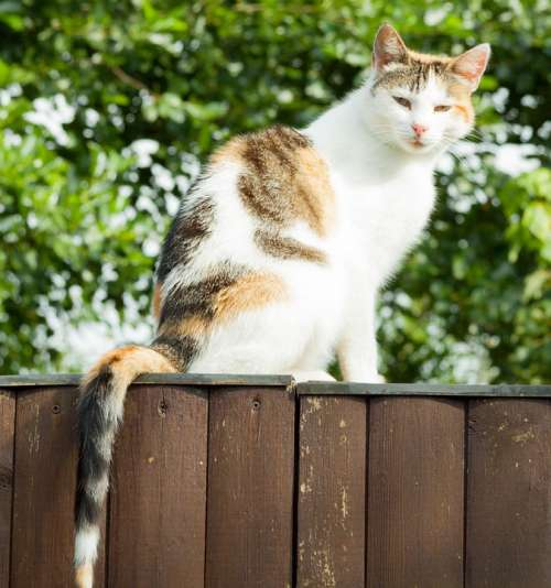 Cat Mammal Pet Sit Fence Wood Fence