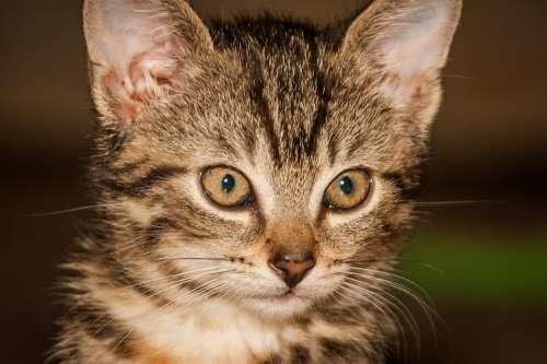Cat Young Cat Playful Pet Cat Face Head Mieze