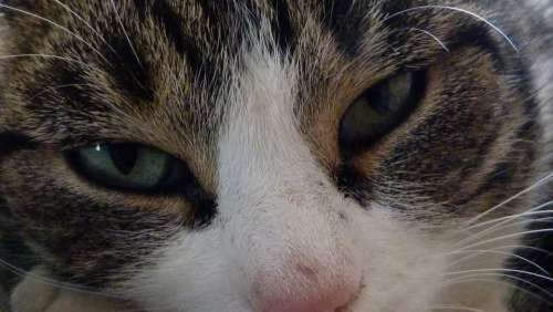 Cat Animals Eyes Pet Look Observation Sharing