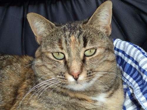 Cat Feline Miao Animal Muzzle Hair Mustache Eyes