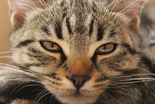 Cat Boredom Radwasabry Watch Bored