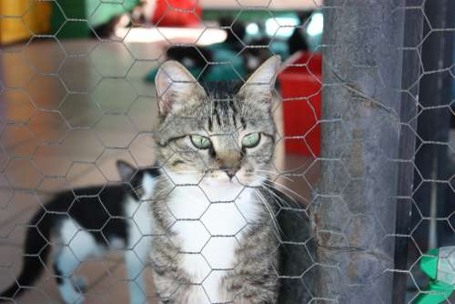 Cat Kennel Cute Cat Cat'S Eyes Animals Cat Face