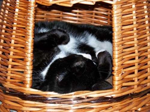 Cat Sleeping Hide Wicker Basket