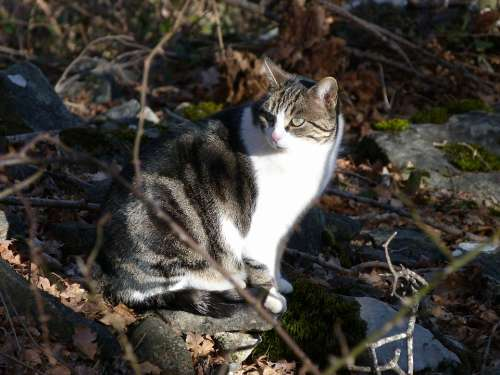 Cat Animals Nature Pet Light And Shade Contrast