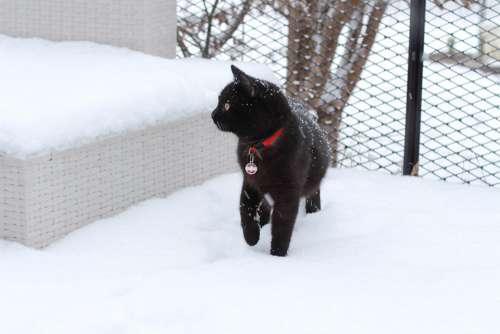 Cat Snow Domestic Cat Animal Mieze