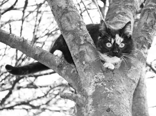 Cat Climb Tree Lurking Attention Kitten