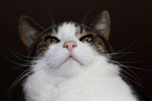 Cat Domestic Cat Nose Cat'S Eyes Animals Nature
