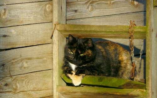 Cat Pet Domestic Cat Animal World Animal Animals