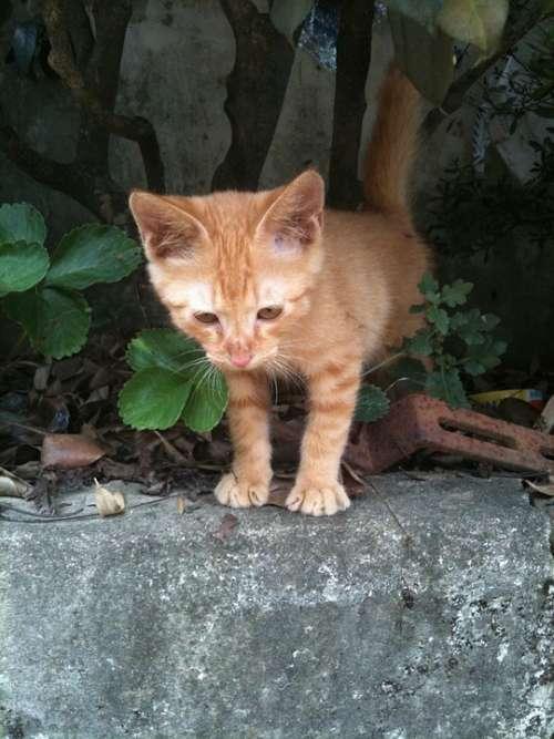 Cat Animal Spring