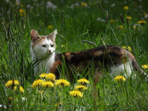 Cat Meadow Nature Pet Animals