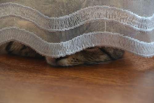 Cat Kitten Tomcat Animals Animal Fur Charming