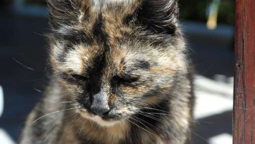 Cat Face Cat'S Eyes Animals Animal Nature Pet