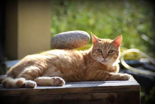 Cat Animal Menhir