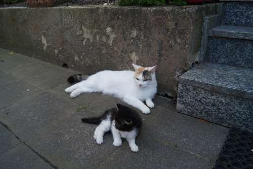 Cat Young Smooch Mother Kitten Young Cat Animal