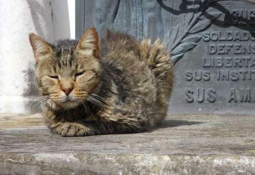 Cat Cemetery Peace Sleeping Sunny Feline Wild