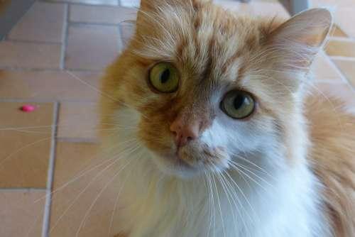 Cat Eyes Large Cute Cat'S Eyes Domestic Cat Mieze